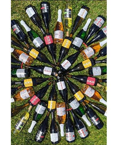 Array of Sokol Blosser Wines arranged in a sunburst on grass